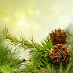 Pine-Cones-On-Branches
