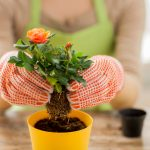 planting and profession concept - clos